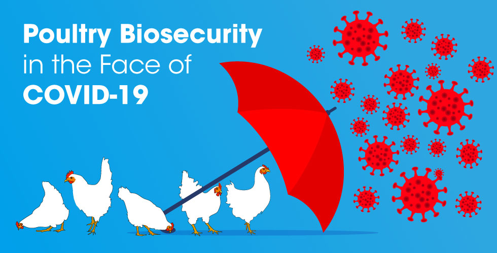 Boehringer Ingelheim – Poultry Biosecurity in the Face of COVID-19
